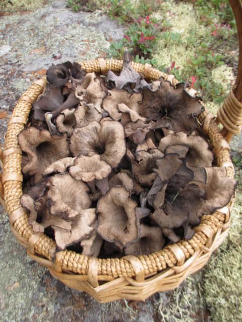 A basket full of mushrooms