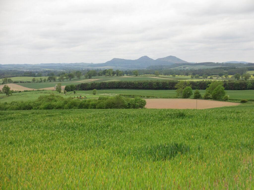 Eildon Hills in the distance